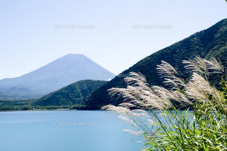 富士山とススキ 朝霧高原の写真素材 [FYI00883540]