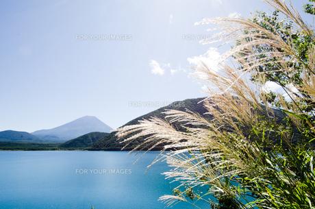 富士山とススキ 朝霧高原の写真素材 [FYI00883541]
