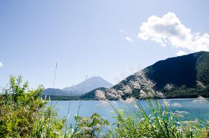 富士山とススキ 朝霧高原の写真素材 [FYI00883542]