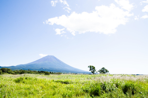 富士山とススキ 朝霧高原の写真素材 [FYI00883543]