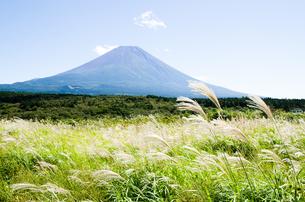 富士山とススキ 朝霧高原の写真素材 [FYI00883550]