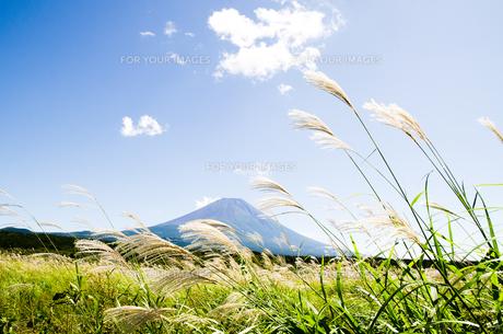 富士山とススキ 朝霧高原の写真素材 [FYI00883551]