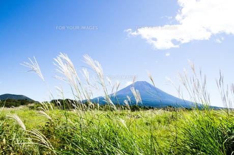 富士山とススキ 朝霧高原の写真素材 [FYI00883553]