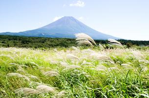 富士山とススキ 朝霧高原の写真素材 [FYI00883556]