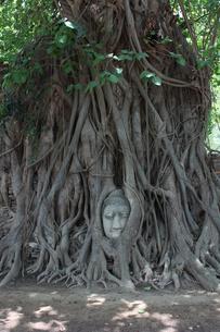 タイ・アユタヤ ワット・マハタートの仏頭の写真素材 [FYI00883625]
