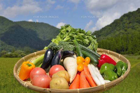 青空と野菜の集合の写真素材 [FYI00883655]