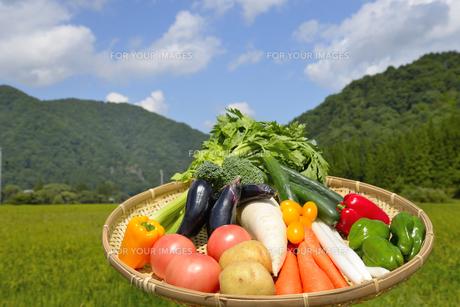 青空と野菜の集合の写真素材 [FYI00883656]