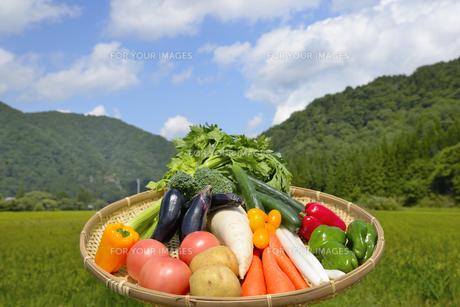 青空と野菜の集合の写真素材 [FYI00883657]