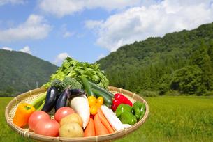 青空と野菜の集合の写真素材 [FYI00883662]