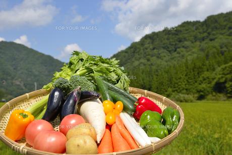 青空と野菜の集合の写真素材 [FYI00883663]