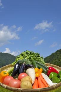 青空と野菜の集合の写真素材 [FYI00883664]