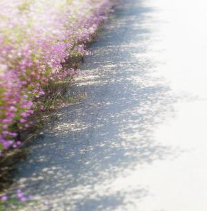 路傍の花の写真素材 [FYI00883939]