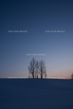 冬の夕暮れの丘の写真素材 [FYI00884080]