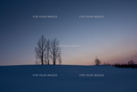 冬の夕暮れの丘の写真素材 [FYI00884082]