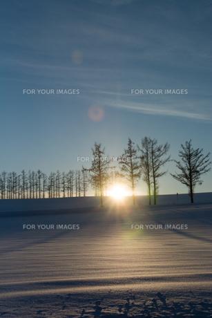 冬の夕暮れの丘の写真素材 [FYI00884089]