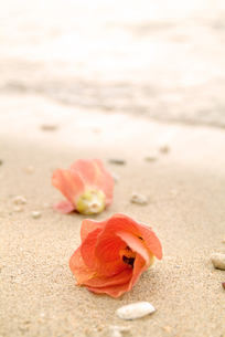 浜辺のユウナの写真素材 [FYI00884364]