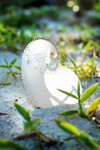 砂浜の一コマの写真素材 [FYI00884378]