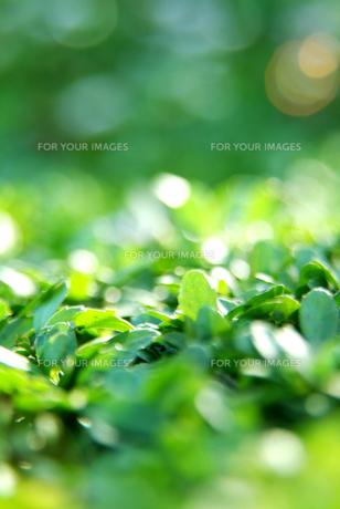 緑色のイメージの写真素材 [FYI00884384]