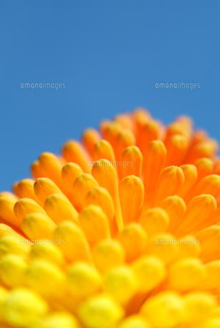 初夏のイメージの写真素材 [FYI00884389]