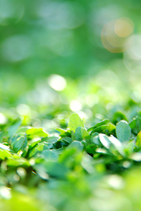 緑色のイメージの写真素材 [FYI00884392]