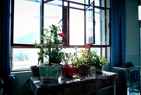 ウルムチの窓辺の写真素材 [FYI00884406]