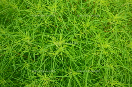 緑色の意匠の写真素材 [FYI00884418]