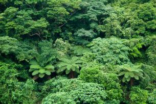 亜熱帯の植生の写真素材 [FYI00884421]