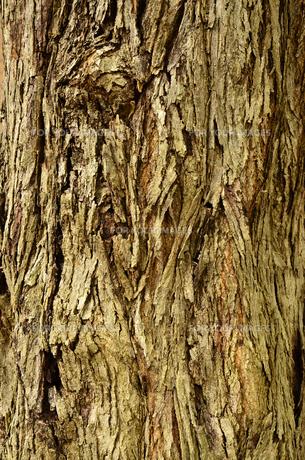 深い森の樹皮の写真素材 [FYI00884448]
