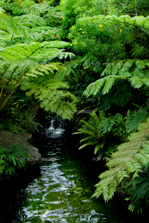 亜熱帯 緑のトンネルの写真素材 [FYI00884460]