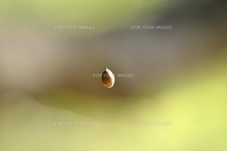 空中のドングリの写真素材 [FYI00884489]