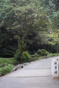 秋芳洞の風景の写真素材 [FYI00884523]