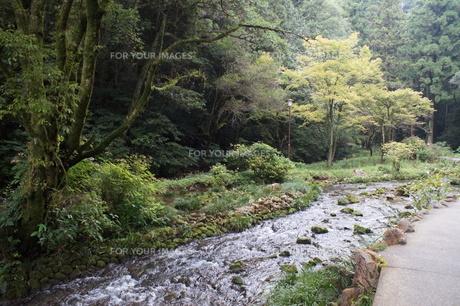 秋芳洞の風景の写真素材 [FYI00884524]