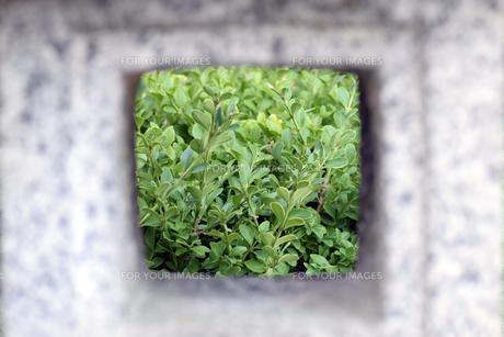 石の灯篭から覗く世界の写真素材 [FYI00884590]