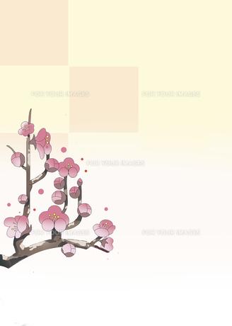 初春の梅の写真素材 [FYI00885050]