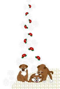 可愛い柴犬の子犬と赤い椿の花の和風イラストポストカードのイラスト素材 [FYI00885656]