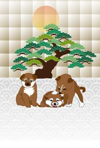 柴犬の子犬と松の木と日の出の和風イラストポストカード のイラスト素材 [FYI00885669]