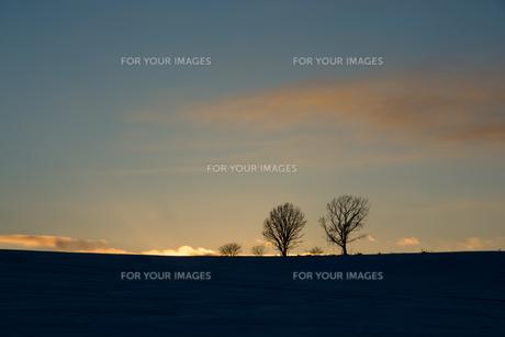 冬の夕暮れの丘に立つ冬木立の写真素材 [FYI00885720]