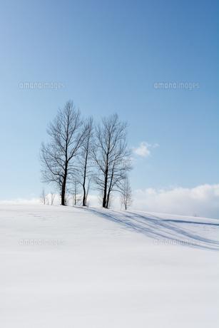 青空と丘の上の冬木立の写真素材 [FYI00885725]