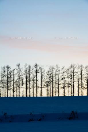 夕暮れの空と冬の丘の写真素材 [FYI00885726]