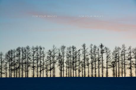 夕暮れの空と冬の丘の写真素材 [FYI00885729]
