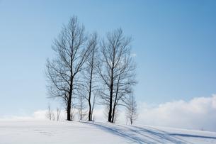 青空と丘の上の冬木立の写真素材 [FYI00885734]