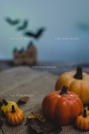 ハロウィンのかぼちゃの写真素材 [FYI00885780]