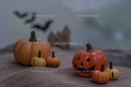ハロウィンのかぼちゃの写真素材 [FYI00885788]