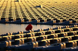 夕日を浴びる太陽光パネルの写真素材 [FYI00886184]