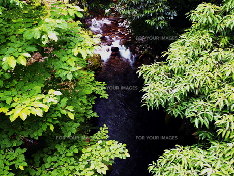 大分県日田市 夏の津江川の写真素材 [FYI00886233]