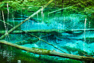 神の子池 摩周湖周辺の伏流水が湧き出す神秘的な池 (北海道・道東・清里町)の写真素材 [FYI00886235]
