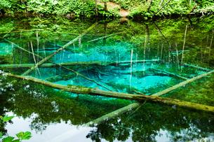 神の子池 摩周湖周辺の伏流水が湧き出す神秘的な池 (北海道・道東・清里町)の写真素材 [FYI00886236]