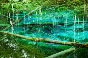 神の子池 摩周湖周辺の伏流水が湧き出す神秘的な池 (北海道・道東・清里町)の写真素材 [FYI00886237]