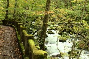 奥入瀬渓流の写真素材 [FYI00886239]