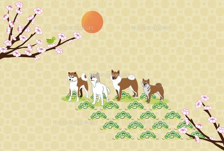 柴犬と梅の花とウグイスの和風イラストのポストカードのイラスト素材 [FYI00886272]